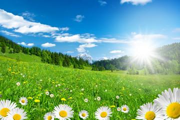 Frühling in den Alpen mit Margeriten und Blumenwiese - fototapety na wymiar