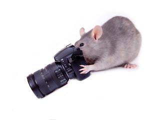 Ratounette photographe...