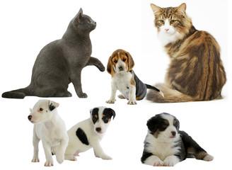 chats et chiens de races différentes réunis sur composition