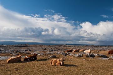famous protected burren park landscape west of ireland