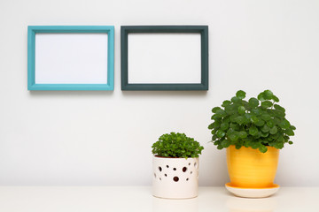Two photo frames on white wall. Potted plants on white table.