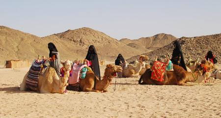 Foto op Plexiglas Kameel camels