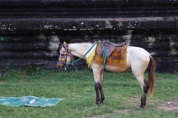 Biały koń, kolorowe siodło