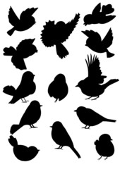 Bird Outlines Collection