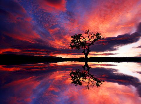arbol y el cielo