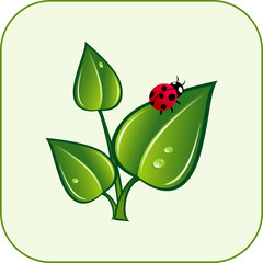 Green leaves with ladybug. Vector