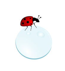 Ladybug on a bubble
