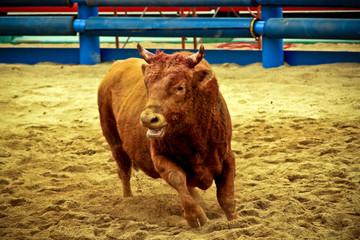 Printed roller blinds Bullfighting Runaway
