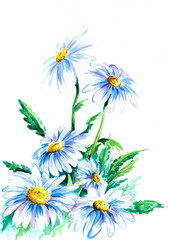 Daisy watercolor painted.