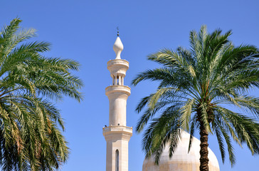 Moschee hinter Palmen