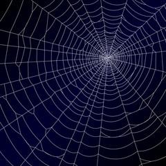 Spider's web. Vector.