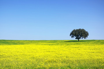Tree in yellow field.