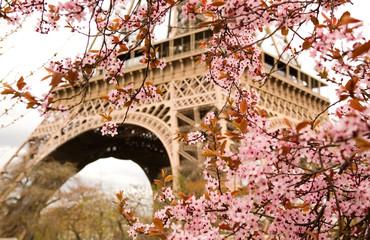 Poster Eiffeltoren Spring in Paris. Bloomy cherry tree and the Eiffel Tower