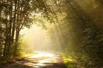 Keuken foto achterwand Bos in mist Country road through autumn forest at sunrise