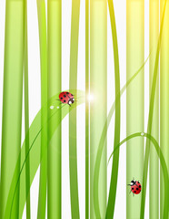 Grass,drops and ladybugs illustration