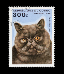 Congo stamp featuring an mean looking exotic shorthair cat