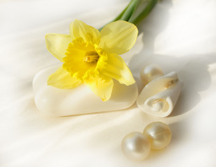 Narcissus, white soap and shell