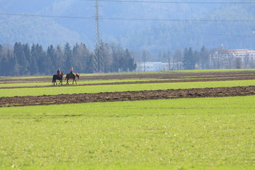 two girls riding horse on green field near city