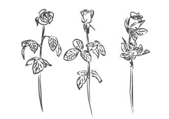 Stylized roses