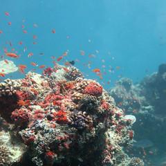 Sonnenüberflutetes Riff - Sun floated reef