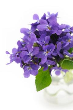 Violet bouequet