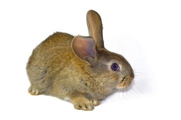 rabbit12