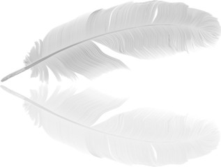 detailed light feather and reflection
