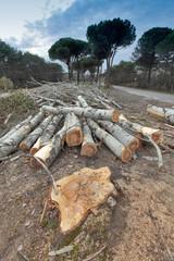alberi tagliati