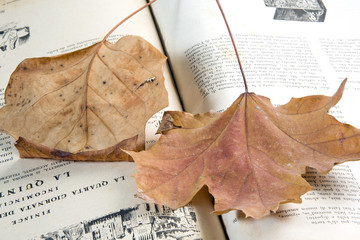 leaf on the book