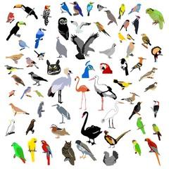 vector color clip-art of bids