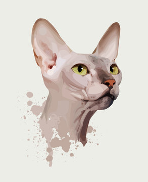 portrait of a cat on an white background, yellow eyes