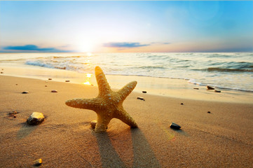 Photo sur Aluminium Plage Starfish on the beach