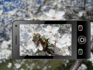 spring in mobile phone