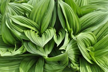 Plante très verte