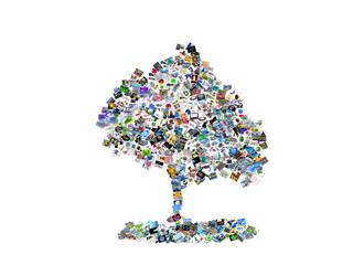 arbre en images