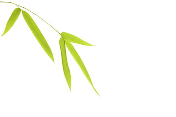 feuille de bambou détourées