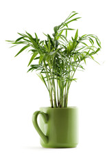 chamaedorea plant in green cup on white
