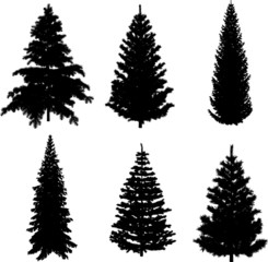 Perfect transparent six Pine trees vectors