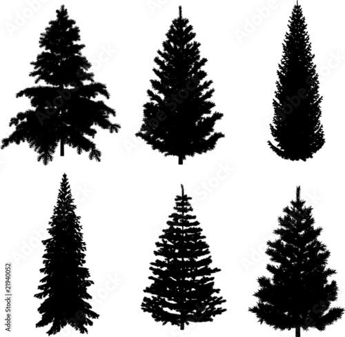 quot perfect transparent six pine trees vectors quot  stock image vector pine trees free pine trees vector png