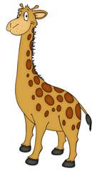 Giraffe, Zoo, Afrika