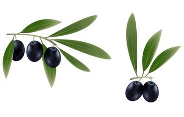 Vector illustration. Three branches of black olives.