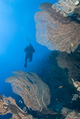 Diver in tropical sea