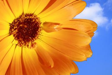 Closeup of a yellow flower