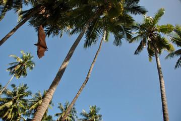 Летучая мышь в пальмах