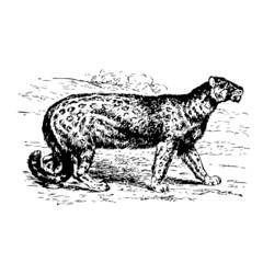 léopard, vecteur