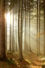 Keuken foto achterwand Bos in mist Magic sun rays through the trees in the autumnal woods