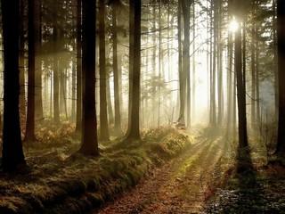 Keuken foto achterwand Bos in mist Forest path at sunset