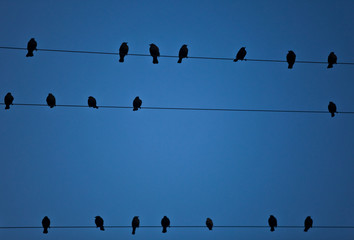 Birds on the Wire Background