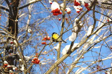 winter view  with  titmouse