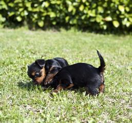 Puppies 8